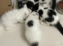 beautiful just turn 3months kitty