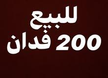 200 فدان للبيع الفرافرة