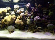 حوض سمك بحري قياس180. 60.60 15مل كريستال طبعا الحوض ناجح ومش ناقصه اشي