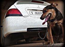 كلب ولف لتبديل بايفون