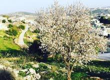 ارض للبيع في عجلون عبين مطلة و سهلة و مزروعة و جاهزة للبناء