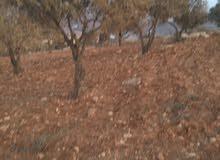 ارض زراعيه 60 دونم مثاليه ام رمانه