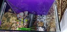 حوض سمك تفصيل