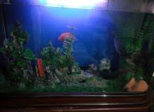 حوض أسماك زينة
