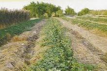 ارض زراعيه للبيع مساحتها 42 فدان مسجله وقابله للنجزئه