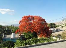 بيت ريفي محاط بإشجار الحمضيات منطقة العارضه