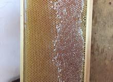 شركه الباشا للنحل والعسل