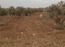 قطعة ارض زراعية غير مفروزة للبدل او للبيع