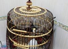 طيور كروان