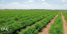 ارض استصلاح زراعي بالعلمين