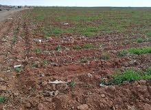 أرض 100 دونم في محافظة المفرق