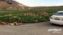 ارض 4000م للبيع في السلط بالقرب من كلية الزراعة جامعة البلقاء حوض الخيمة