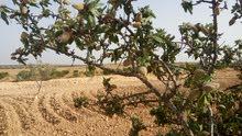 أرض فلاحية ممتازة للبيع في عڨارب ولاية صفاقس