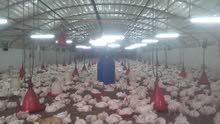 عنابر دجاج للايجار السنوي