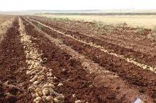 ارض للبيع  90 فدان بتقسيم كل 10 و20 و5 فدان ونوفر مساحات اكبر للاستثمار حتى 300 فدان