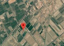 ارض زراعيه 10دونم مقابل محطة كهرباء مشروع بسماية السكني للبيع