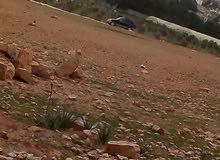 تملك فى احلاه موقع مادبا ولب تبعد عن مادبا 12 كيلو ارض مطله على لب ومليح