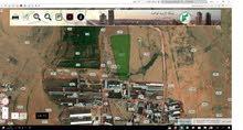 21 دنم الضليل مشروع مزارع البقر