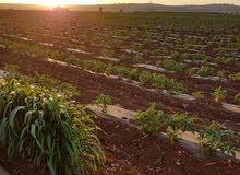 ارض زراعية في حوارة منطقة الأصيلة الدوار الشمالي