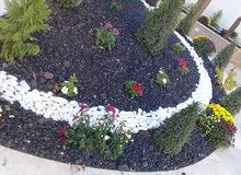 مهندس زراعي للعنايه النبات وتصميم الحدائق