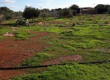 أرض للبيع مساحتها 6000 متر تقع بطريق الكويفية بوهادي