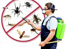 pest control services  best