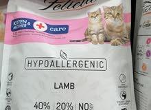 اكل القطط فيليسيا الطبي للأم واطفالها