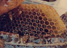 عسل بالشمع