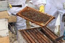 عسل طبيعي 100% بدون اي اضافات