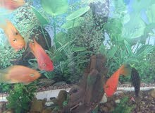 حوض كبير للبيع مع الأسماك