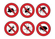 خدمات مكافحة الحشرات والقوارض ورش المنازل