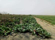 مزرعه للبيع بالفيوم