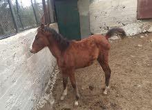 مهر عمر 5 شهور