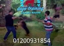 الكينج اكاديمى لتدريب وتأهيل الكلاب (كابتن خالد)