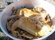 نقوم بطبخ الولأم بأيادي عمانيه