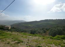 ارض على طريق اربد عمان بليلا