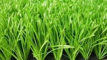 العشب الصناعي بكل انواعها