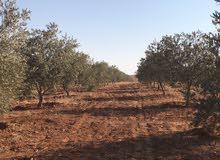 مزرعة 10 دونم للبيع