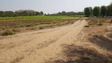 هل تبحث عن أرض زراعية للاستثمار