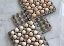 بيض دجاج محلي طازج