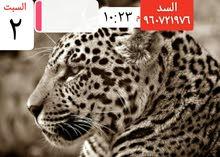 احمد 1234