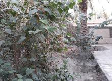 دار مع بستان للبيع طابوا زراعي وباءسمي ويتحول بإسم المشتري