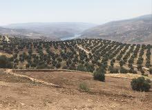 قطعة ارض للبيع جرش المصطبه باطلاله على سد الملك طلال