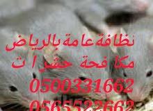 مكافحة الحشرات بالرياض 0500331662