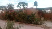 استراحة للبيع 1000م به حوض صغير و70شجرة زيتون مثمر تاجوراءسيدي خليفةاللوز 300ألف
