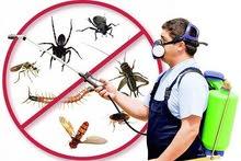مكافحة حشرات وقوارض كفالة سنه