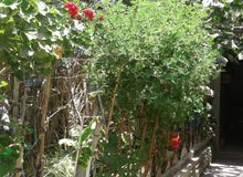 منزل طابقين بالنصيرات قرب الشارع العام