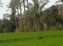مزرعه 3 افدنه للبيع  بمنزل دور واحد على شقتين بالاسماعيلية قرية المنايف