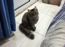 قطوة شيرازي جميله و لطيفه و لعوبه.