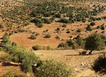 أرض زراعية للبيع في عنجرة -عجلون